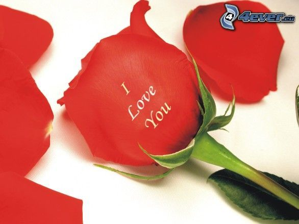 I love you, rose, love
