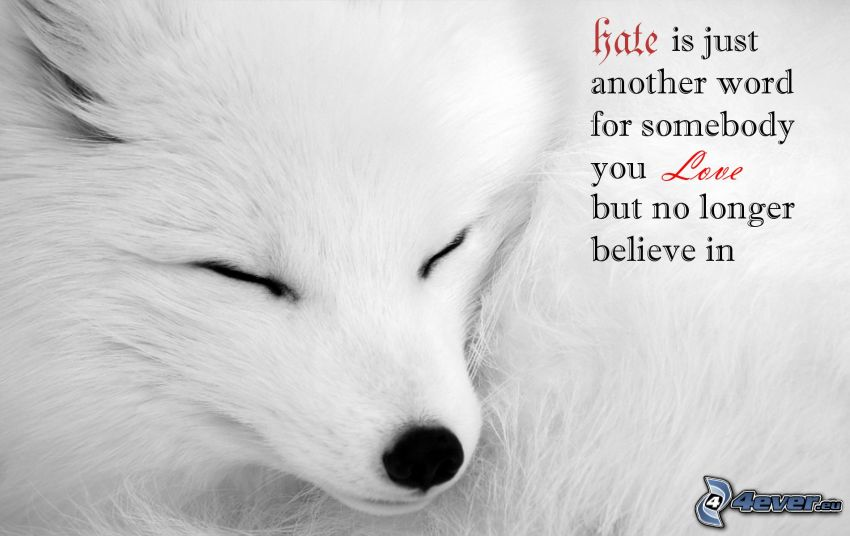 love, hate, white wolf, sleep