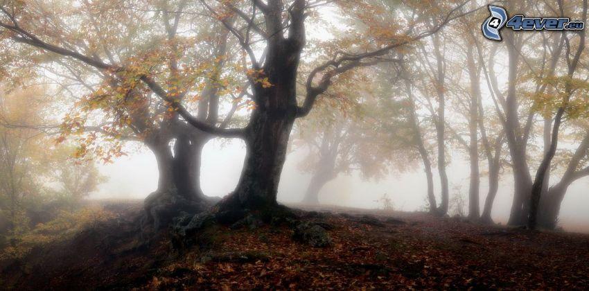 autumn forest, ground fog