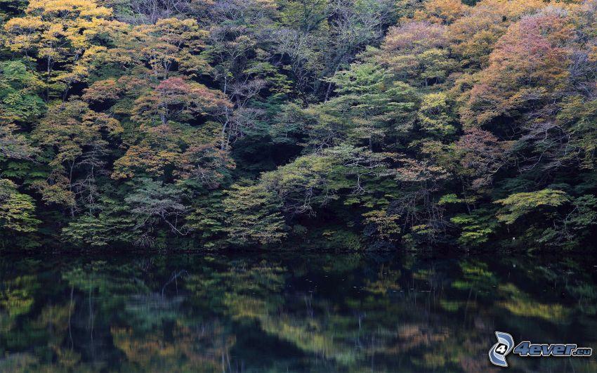 autumn forest, lake