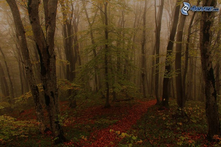 autumn forest, trees, fog