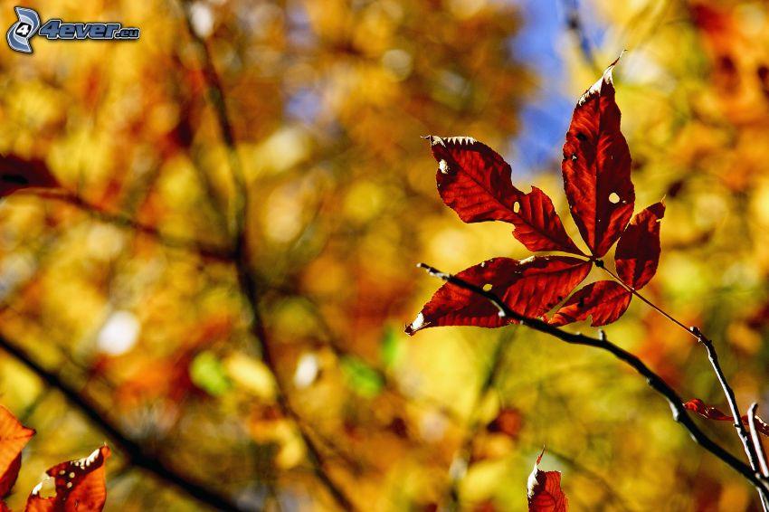 autumn leaves, twig