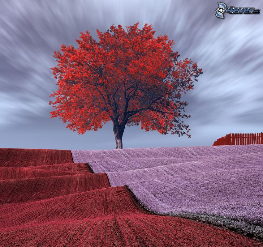 autumn tree, field, flowers
