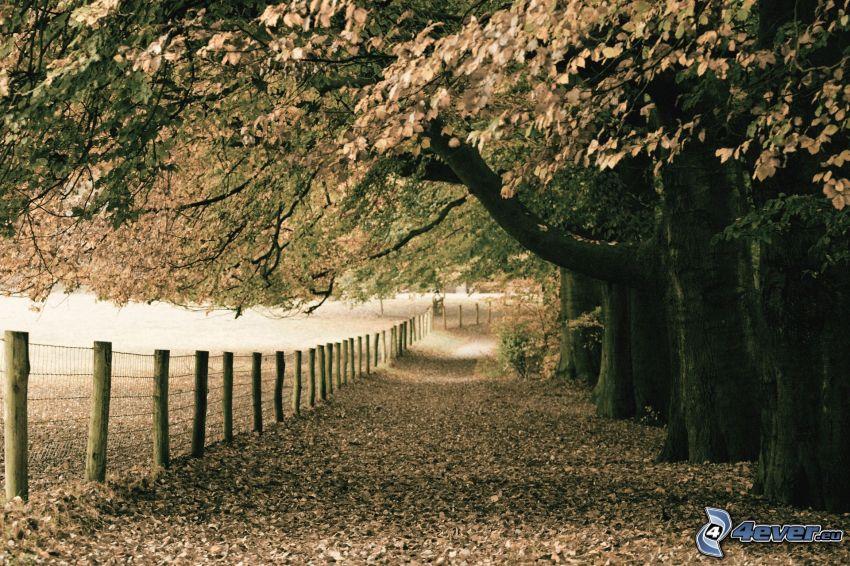 autumn trees, fence, fallen leaves, sepia