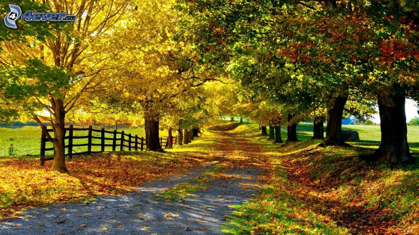 autumn trees, road, avenue of trees, fence