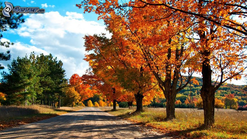 autumn trees, road, colorful autumn forest