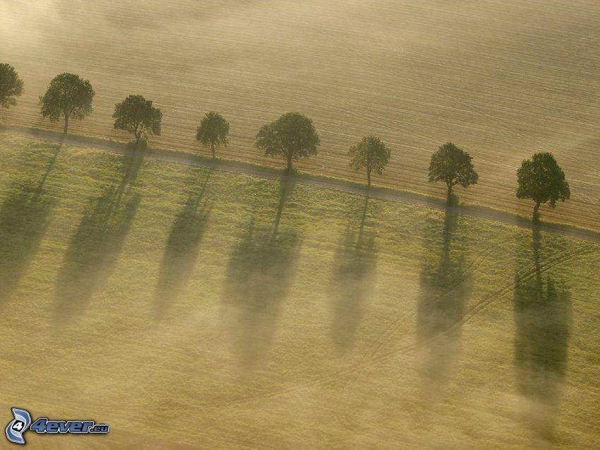 avenue of trees, field, field path