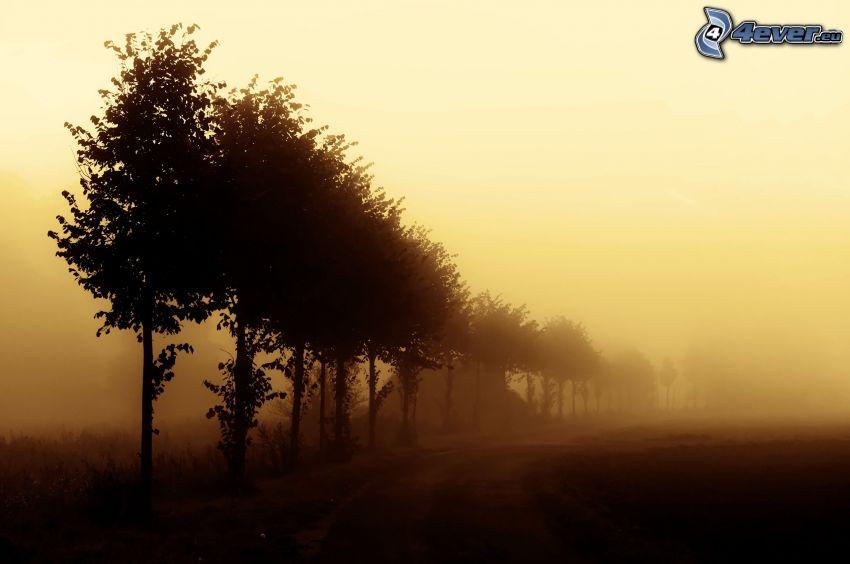 avenue of trees, fog