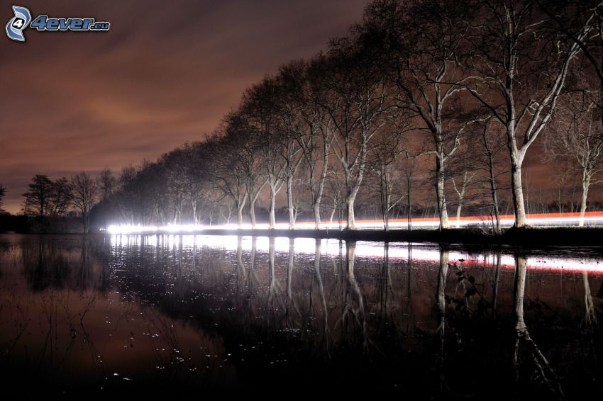 avenue of trees, lights, night