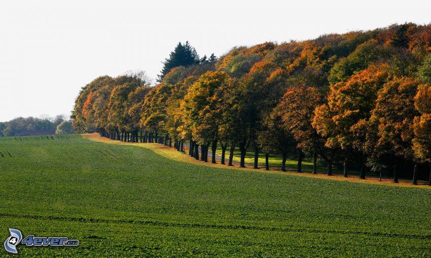 avenue of trees, meadow, road