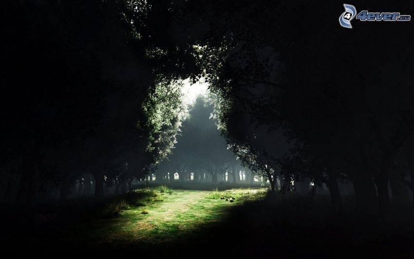 avenue of trees, path, dark forest