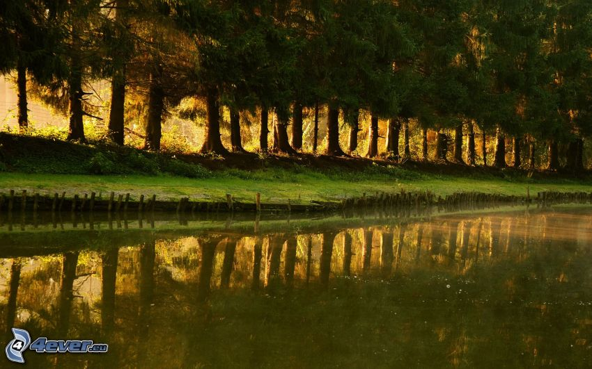 avenue of trees, River, reflection
