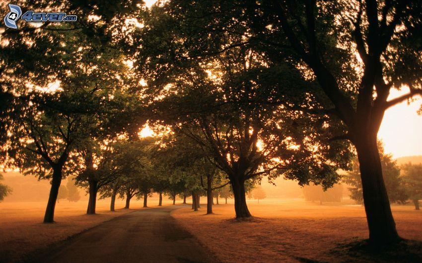 avenue of trees, road, orange sunset