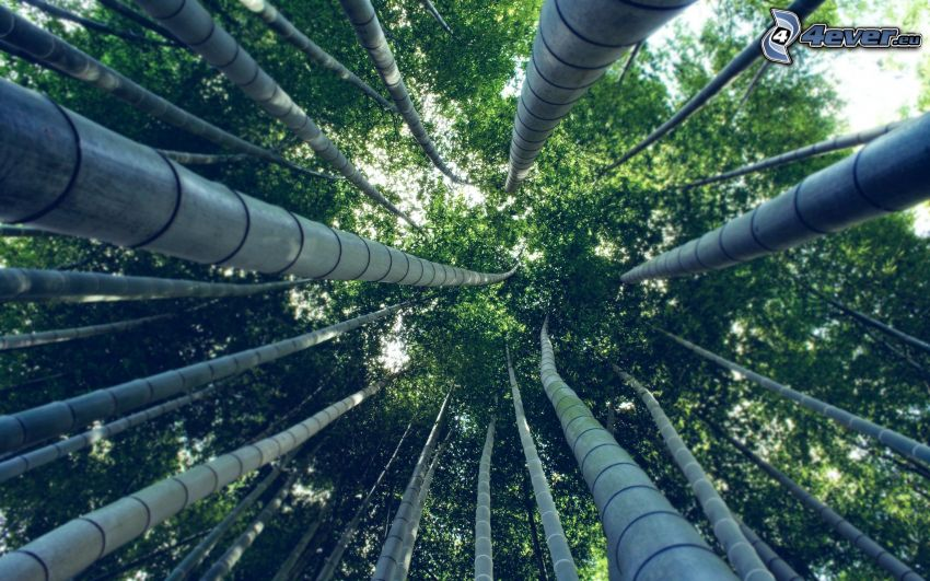 bamboo forest, logs