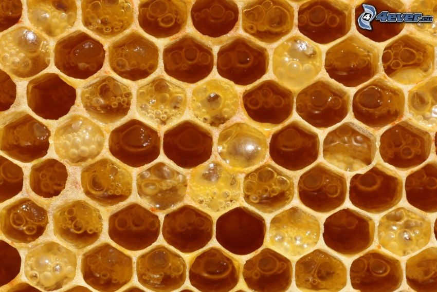 beeswax, honey