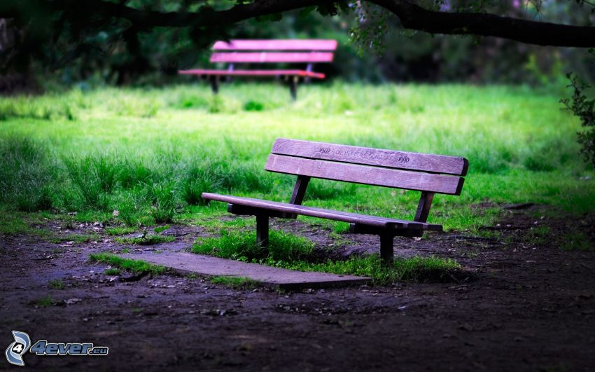 benches, grass