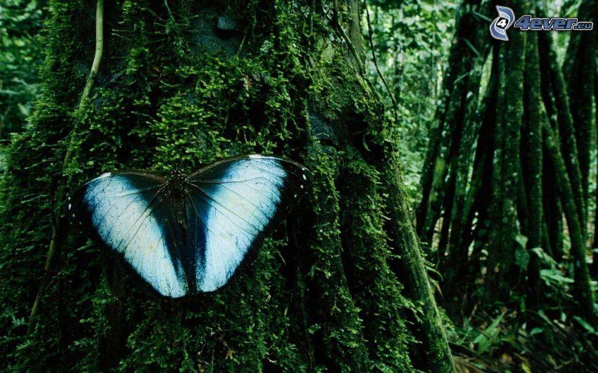 blue butterfly, moss, trees, greenery