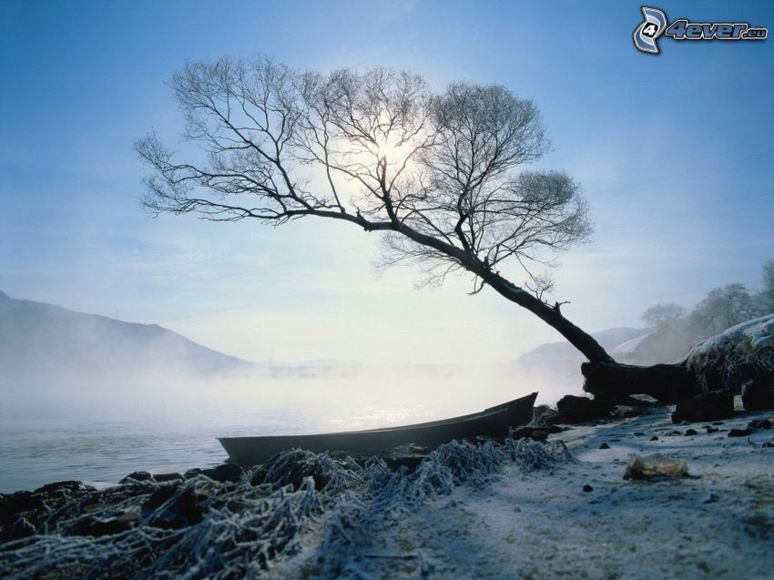 boat on the shore, tree, snow, ground fog
