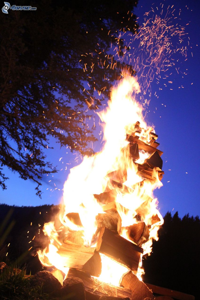 bonfire, fire, silhouette of tree