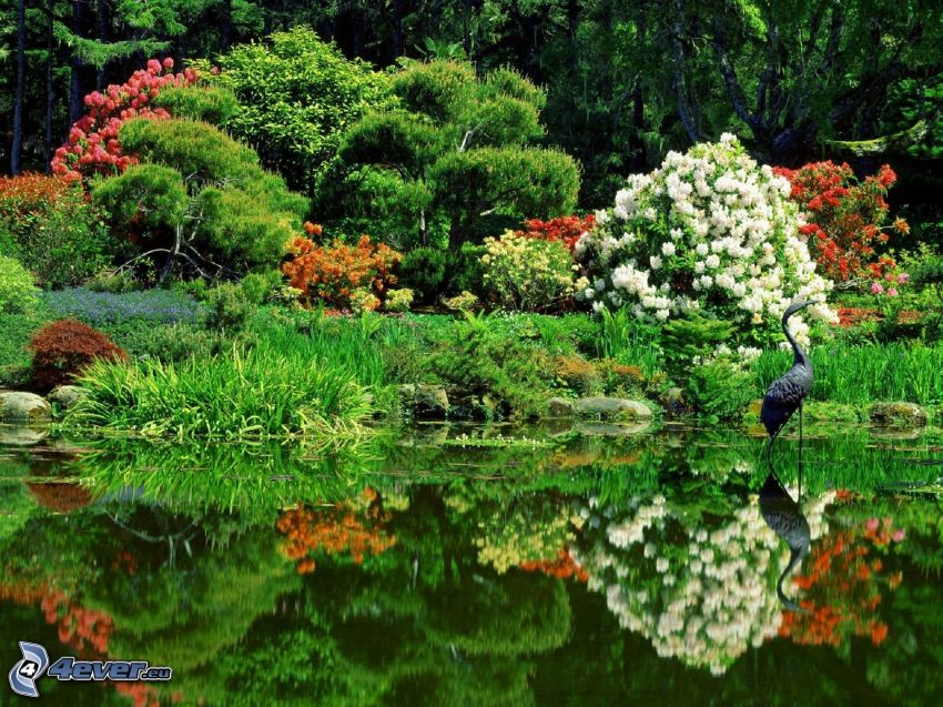 botanical garden, flowers, plants, lake, bird, reflection