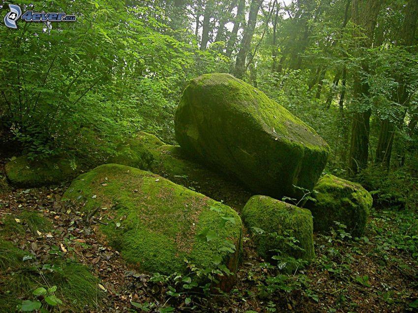 boulders, moss, rocks, forest, greenery