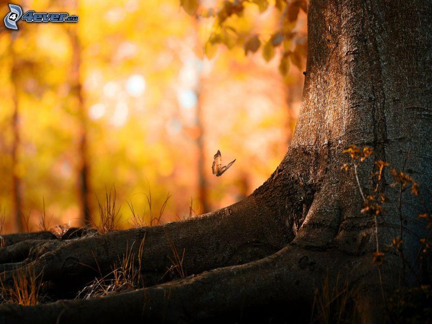 branch, butterfly
