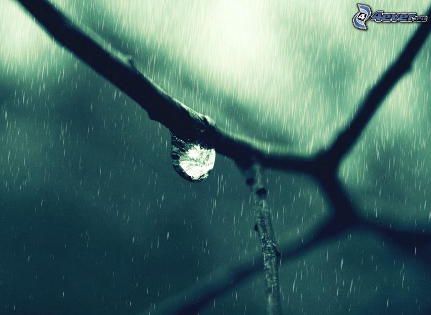 branch, drop, rain