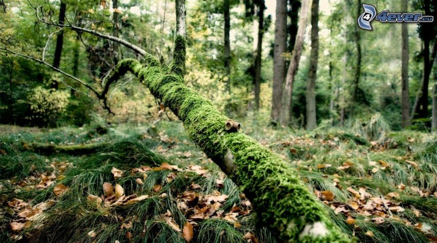 branch, moss