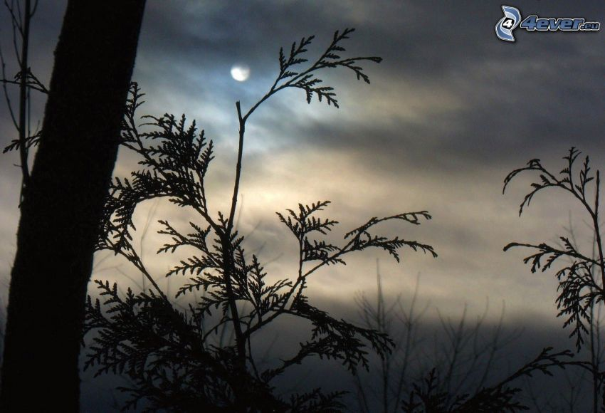 branches, moon
