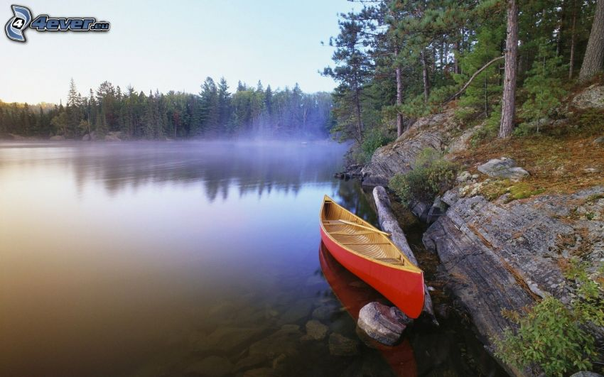 canoe, lake, coniferous forest