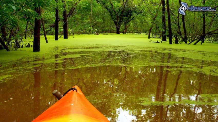 canoe, swamp, greenery