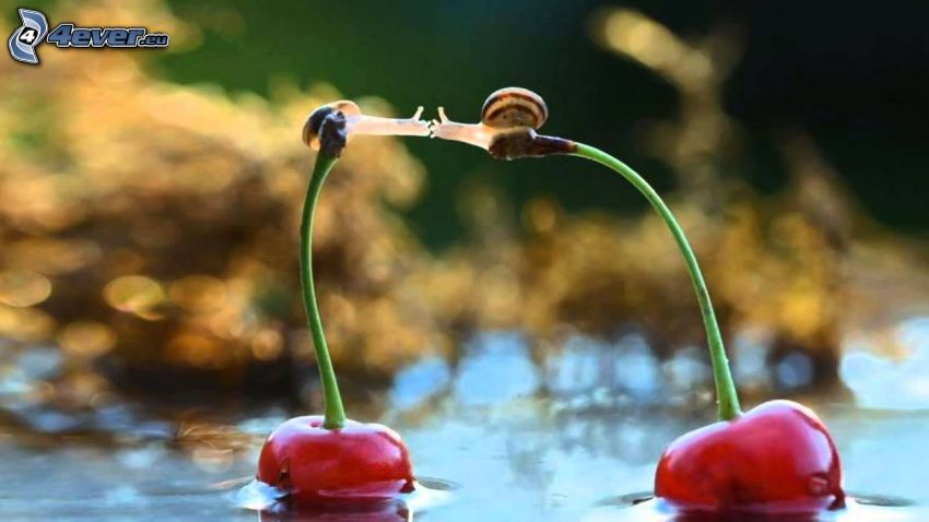 cherries, snails, kiss