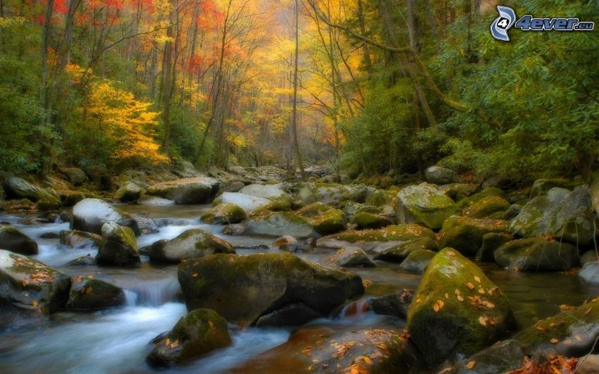 colorful autumn forest, colour trees, stream, rocks