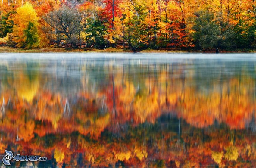 colorful autumn forest, water surface, reflection