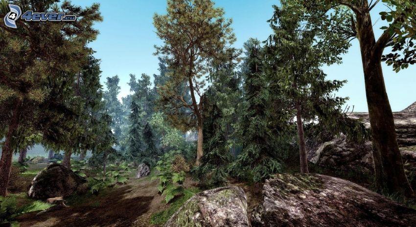 coniferous trees, boulder