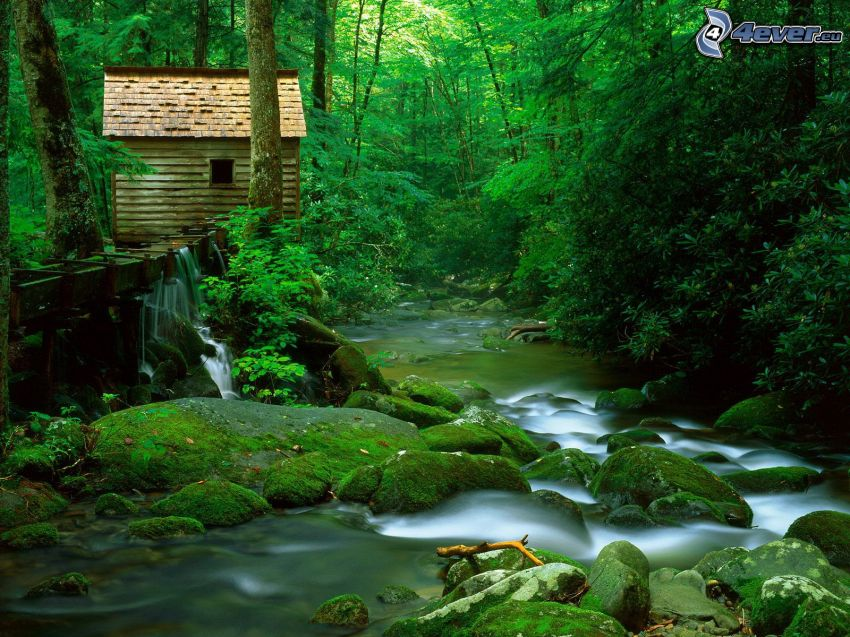 creek in forest, cottage, greenery