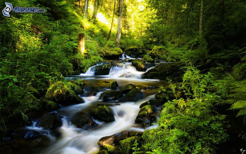 creek in forest, greenery