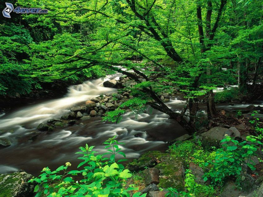 creek in forest, greenery