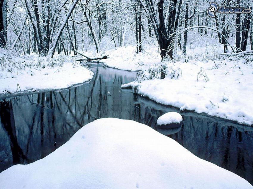 creek in forest, snowy forest