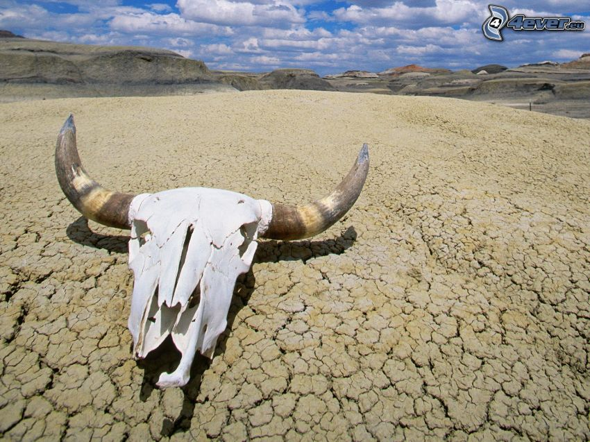 Death Valley, skull, dry land, mountains