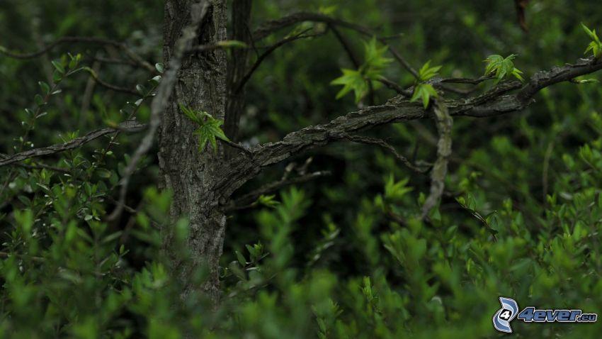 deciduous tree, green leaves