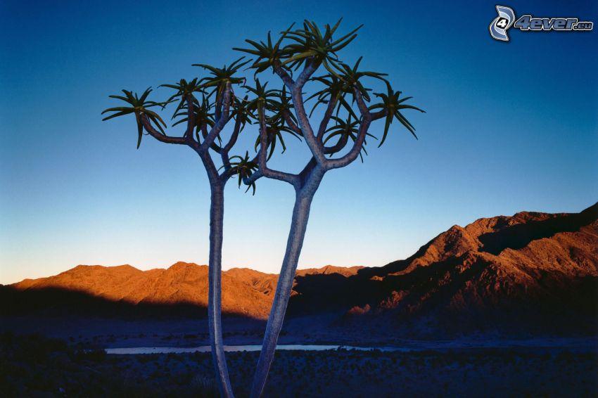 deciduous tree, mountains, sky