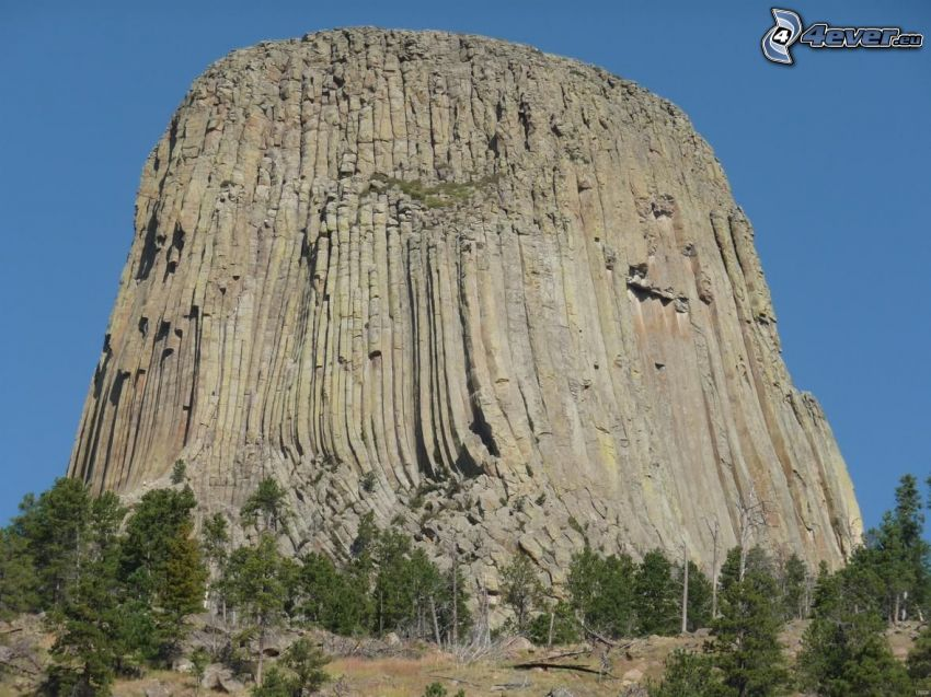 Devils Tower, coniferous trees