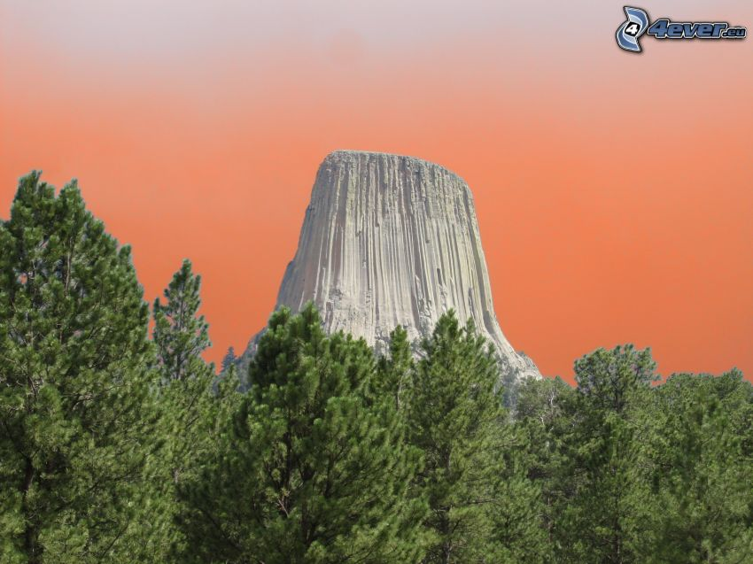 Devils Tower, rock, coniferous forest