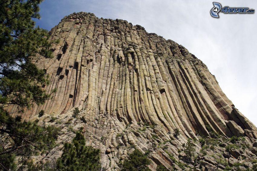 Devils Tower, rock, coniferous trees