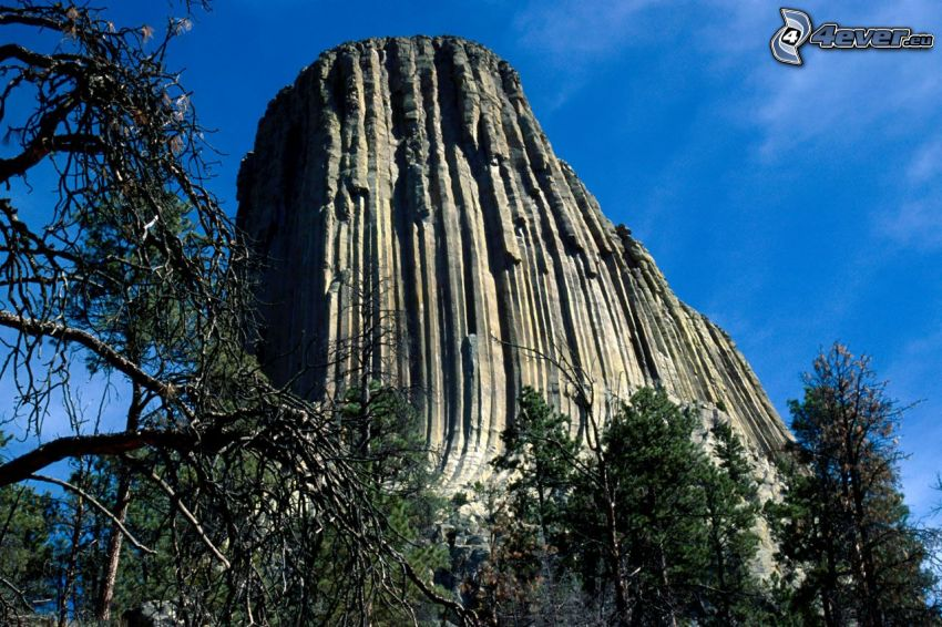 Devils Tower, rock, dry trees, coniferous trees