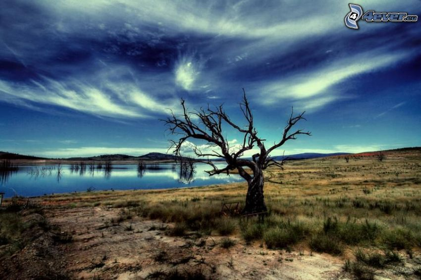 dried tree, lonely tree, lake, arid desert landscape