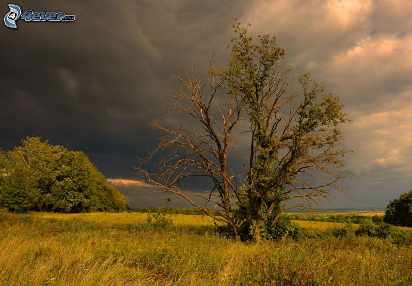 dry tree, lonely tree, grass, clouds