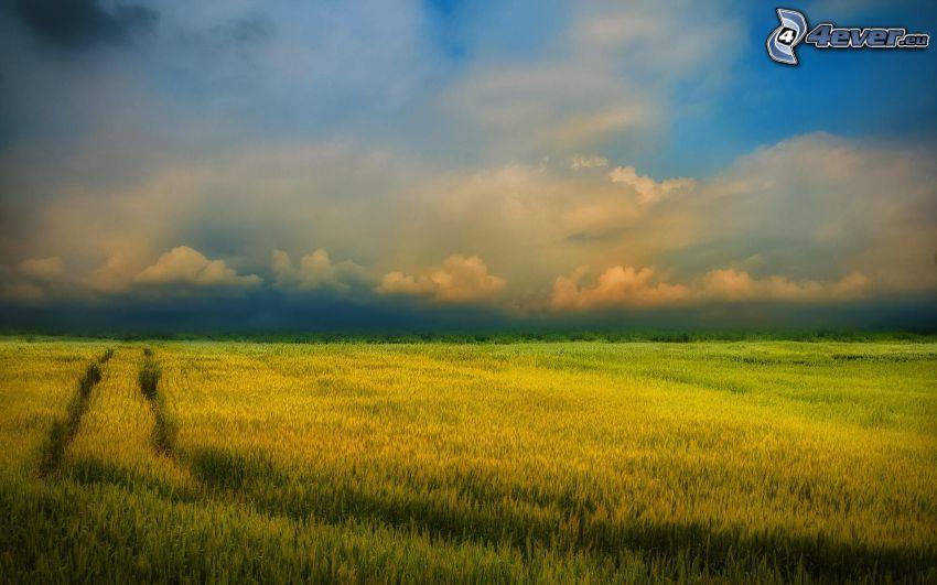field, clouds