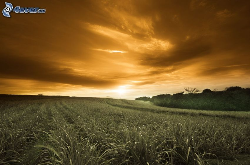 field, evening